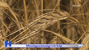 Híradó: Mezőgazdasági körkép