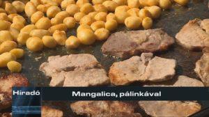 Mangalica, pálinkával